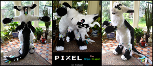 Pixel the Dutch Angel Dragon (fursuit) by TrelDaWolf