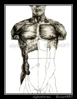 Musculature: Pencil: Unfin by slipknotcrow
