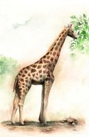 The giraffe color version by wantou