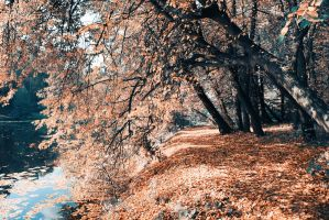 The path under the trees by PhotoTori