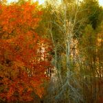 Shades of Autumn 2014.XXI by MadGardens