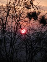 Sun and Branches by Dracofemi