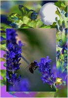 lavender and bee by sonafoitova