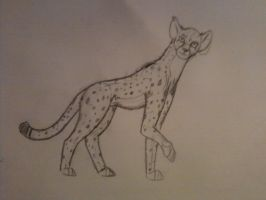 i can draw cheetahs :D by Darkwolfhellhound
