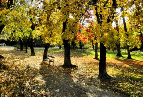 Autumn in the park 01 by Biljana1313