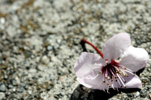 Blossom by engelberger
