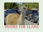 Thanks Llama by MichelLalonde