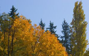 Fall Color by CeriseReve