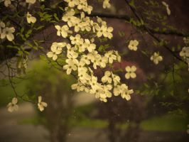 Raining On The Flowers by JohnKyo