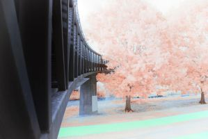 Tree Bridge by helios-spada