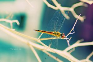 dragonfly 2 by ReisLie