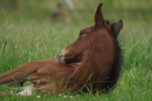 Foal stock 99 by Bundy-Stock