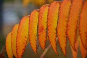 Leaves 12 by Risandell