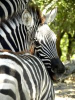 Where Can You See Zebras? by soyrwoo