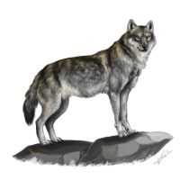 Wolf in Grey and Yellow by Xeikkeiu