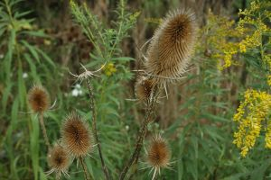 porcupine plant by treehugginhippie