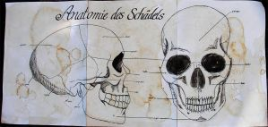 Anatomy of the skull by Cruzio