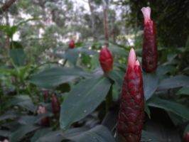 Alien Plant Unknown #002 by Falcoliveira