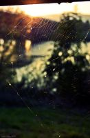 Spiderweb by m3tzgore