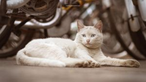 A cat in CAFA by roamest