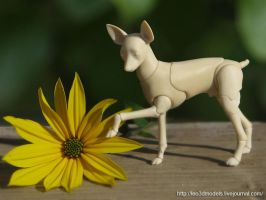 Russian-Toy-Terrier 0 by leo3dmodels