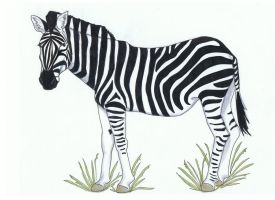Zebra by Sakura-no-Hana90