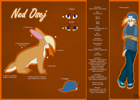 Reference sheet- Ned by KaXie