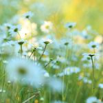 meadow XIII by indojo