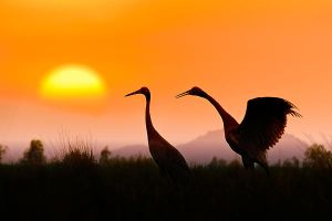 Red-headed crane by hoangnamphoto