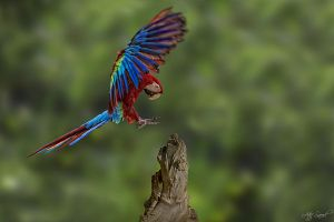 Landing.. by M-Atif-Saeed