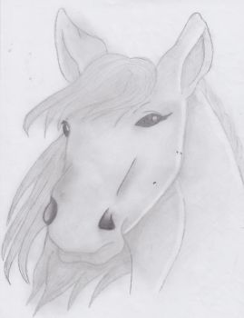 Face of a horse by OceanEyes1996