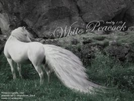 White Peacock by wildbrumby