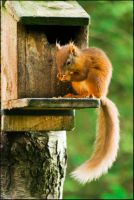 Just Nuts about Nuts by gordonrae