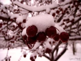Red Winter by EugenieA