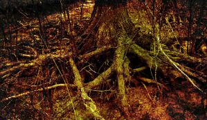 The Bloody Tree by cadillacphunque