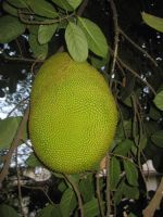 Jackfruit by AbstractWater