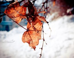 Still autumn by Alessia-Izzo