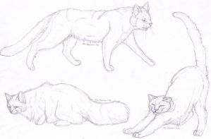 Feline Anatomy Practise by The-Fabulous-Fox