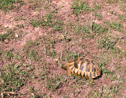 Turtle - Tortoise by LenSpirations