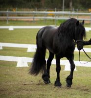 FR Stally small trot by Chunga-Stock
