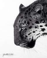Amur Leopard by GabrielleC-Drawings