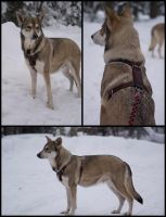 Dog Harness Skadi II by Wodenswolf