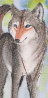 .: Blue eyes- ACEO:. by Shien-Ra