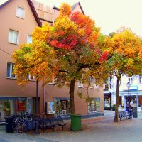 autumn trees by Mittelfranke