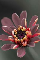 Selective red flower by a6-k