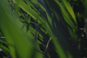 Blades of Grass by PocketDreams