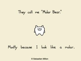 Molar Bear by sebreg