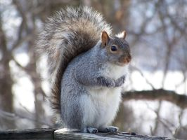 Squirrel by user-name-not-found