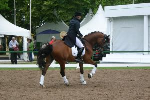 Dressage Canter Stock 03 by LuDa-Stock