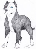 Pit bull Adoptable CLOSED by ForeverFallen16